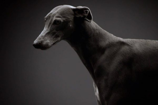 Opel Monza Concept Dog